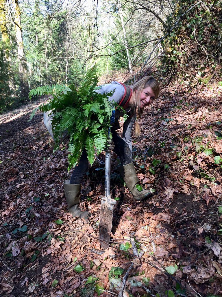 Sound Native Plants crew installing native plants
