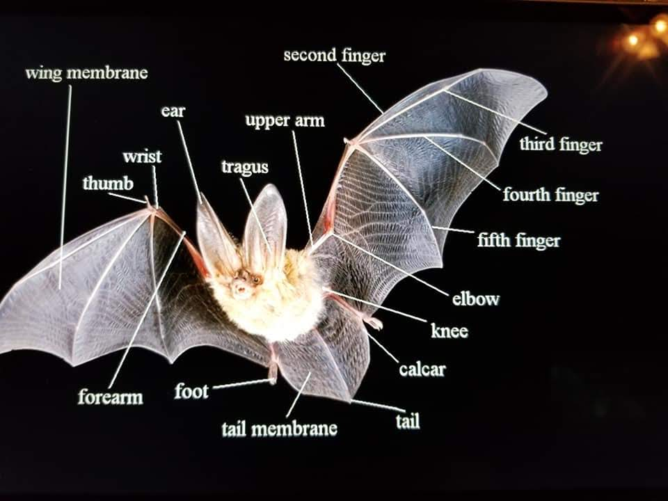 Illustration of a bat with labeled parts